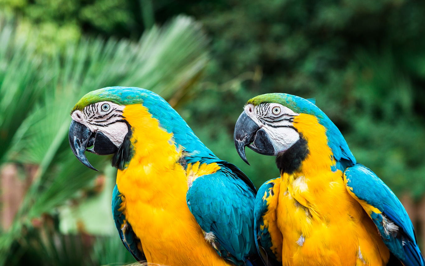 Best Diets for your Large Macaw & Cockatoo