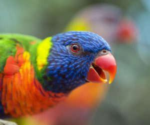 Solutions to behavioural problems in Parrots